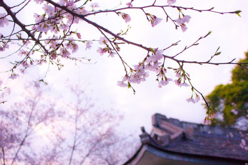 kwiaty na drzewie