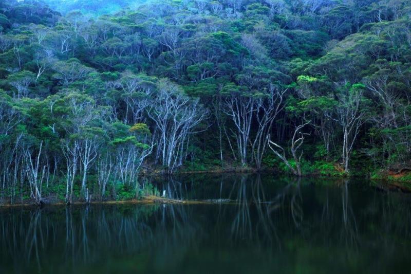 zdjęcie jeziora i lasu